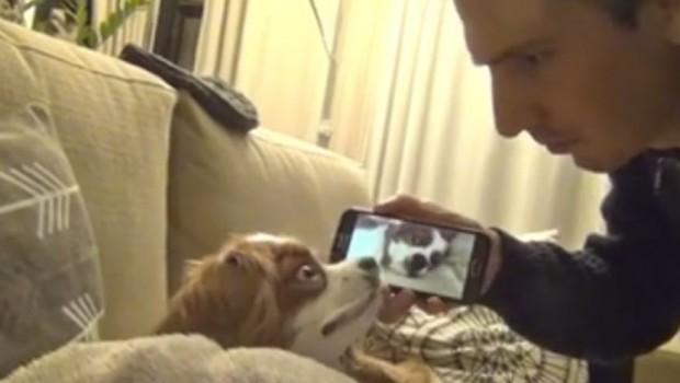 Boleće vas stomak od smeha kad čujete kako ova kuca hrče, a tek kad vidite njenu reakciju (VIDEO)
