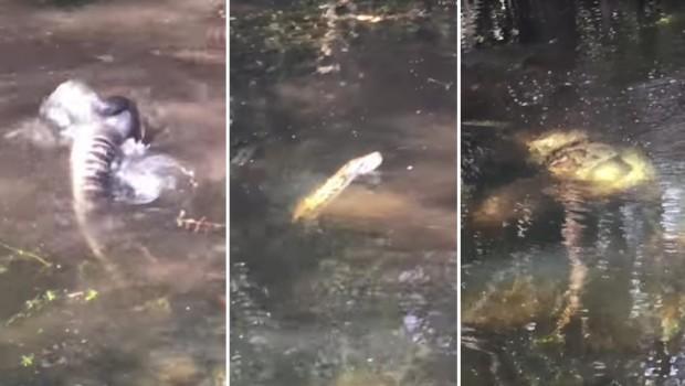 piton-aligator-borba