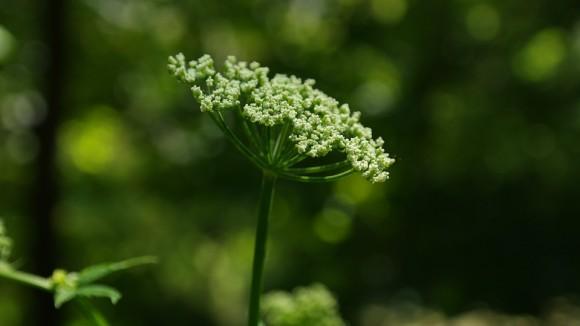 NEOBIČNA I JAKA: Ova biljka leči svaku boljku..