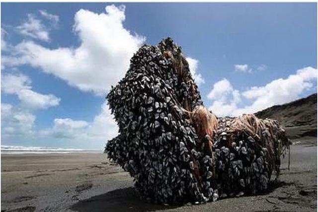 ČUDESNA STRUKTURA: Niko ne zna šta se nasukalo na obalu, ali misle da NIJE SA OVE PLANETE…