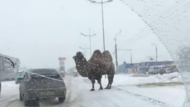 KAKO SE OVA KAMILA STVORILA OVDE? Smejaćete se kad vidite šta je uradila smrznutim Rusima (VIDEO)