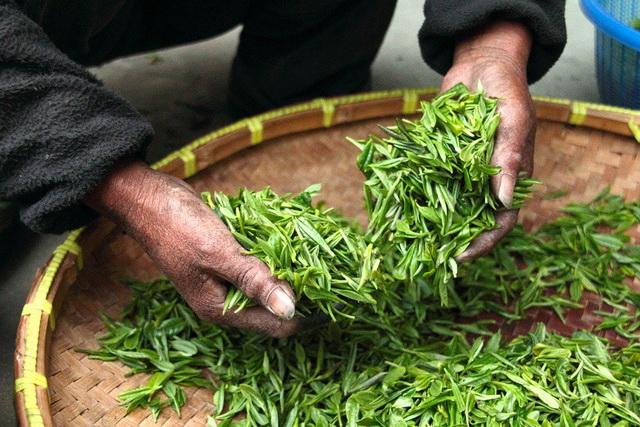 ruke- biljke- trava- zemljoradnik- seljak