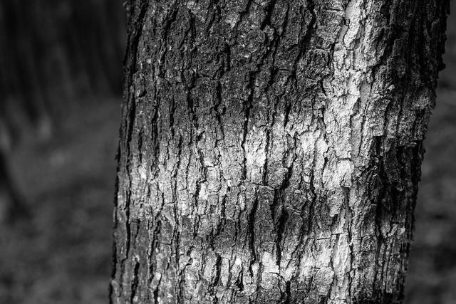 drvo-suma