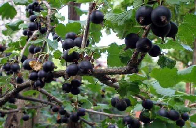 ZAGARANTOVANA DOBIT: U Srbiji su poludeli za ovom biljkom ZARADA JE OGROMNA, A MALO KO JE GAJI (VIDEO)
