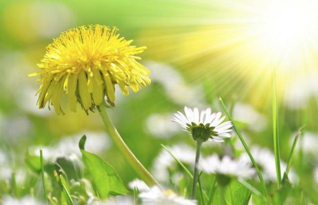 NAJVAŽNIJE OTKRIĆE OBRADOVALO SRBIJU: Ova biljka uspešno leči najteže bolesti a kod nas je ima u izobilju!!
