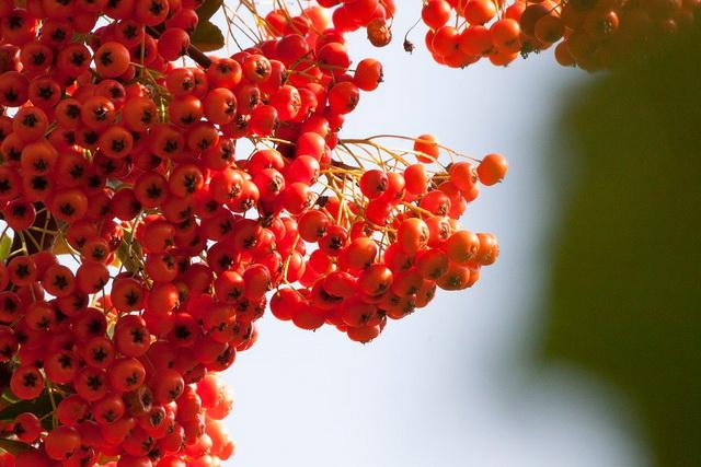 pasiji-trn-biljka