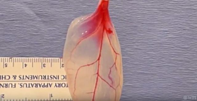 REVOLUCIJA U NAUCI: Pretvorili list spanaća u ljudsko srčano tkivo! (VIDEO)