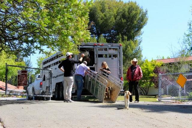 koze-kamion