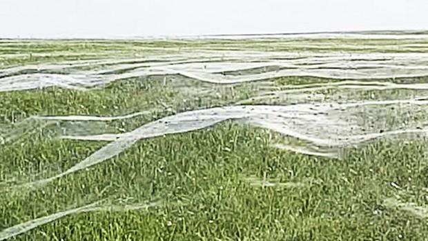 Šetala sam se sa sinom po polju: Odjednom smo videli gomilu paučine, a onda je počelo vrištanje (VIDEO)