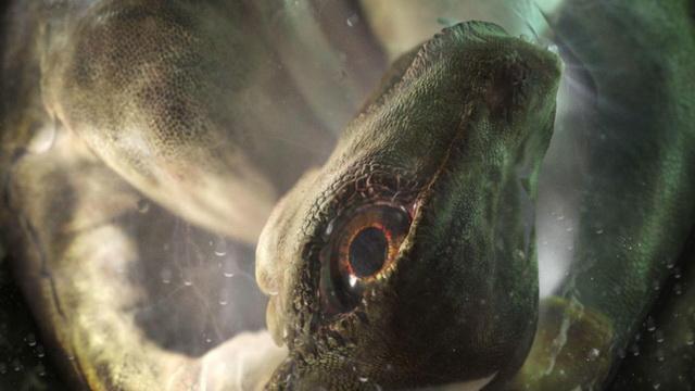 SENZACIONALNO OTKRIĆE: Pronađena ogromna jaja dinosaurusa stara 70 MILIONA GODINA (VIDEO)