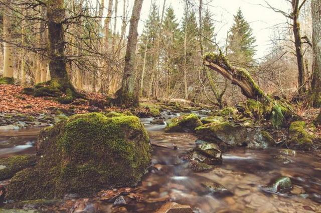 izvor-reka
