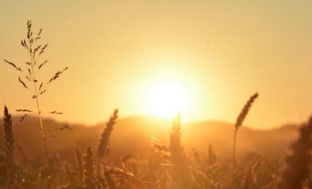 Sunce-livada