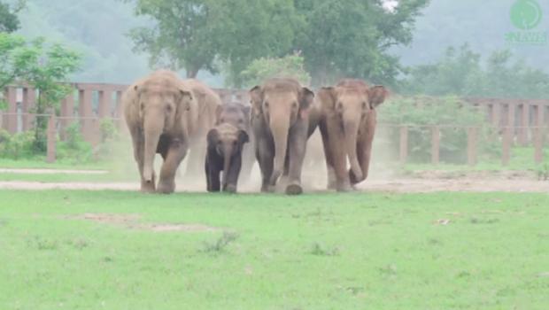 slonovi-Print