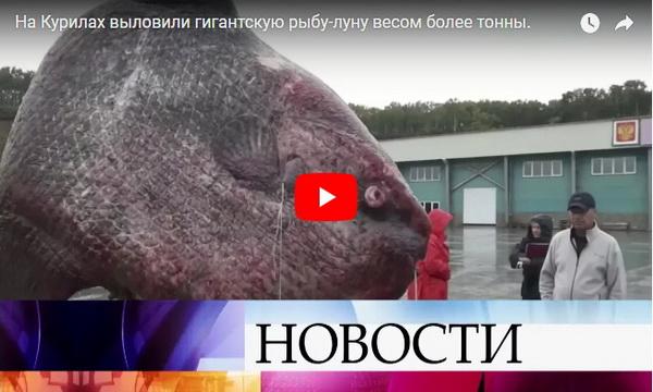 riba- rusija