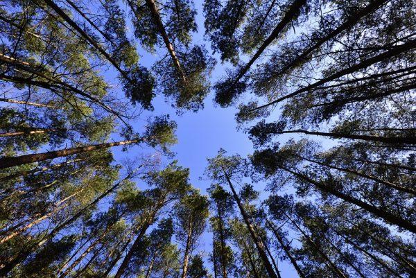 Drveće razgovara: Nakon ovoga više nikada nećete šume gledati istim očima (VIDEO)
